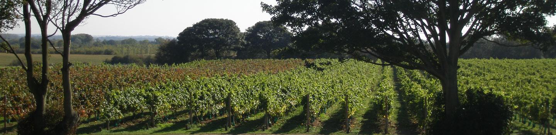 Vineyard-02