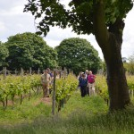 Vineyard Tour 1